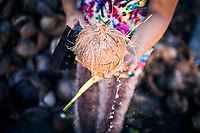 A woman knocks open a coconut to get to the fruit inside at a small farm in Koh Samui, Thailand.