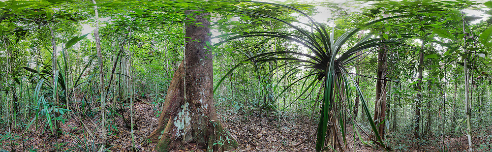 Rainforest on Waigeo, Mayalibit-Bay, Raja Ampat - Papua, 360° Panoramic View