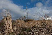 An electricity pylon above a hill covered in Japenese pampas grass near Miharu, Fukushima, Japan, Wednesday May 1st 2013