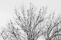http://Duncan.co/blackbirds-in-a-tree