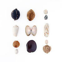Unidentified seeds, Cone Snail (unidentified sp.), Cowrie (Cypraea sp.), coconut seed (Cocos nucifera), unidentified Ark Clam species,  Walai vine seed (Entada phaseoloides), unidentified limpet, Nerite (Nerita sp.), pumice