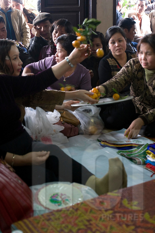 During a vietnamese ceremony, tangerines are distributed and shared. Vietnam, Asia.