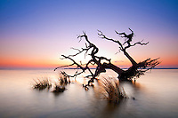 the skeletol remains of a live oak long since flooded out by rising waters sits silhoutted against the pastel colors at the edge of twilight in the Currituck Sound