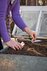 Sowing seed under a cloche in a raised bed in early spring