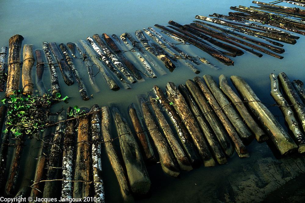 Raft of logs at sawmill, Amazon-Tocantins Estuary, Brazil
