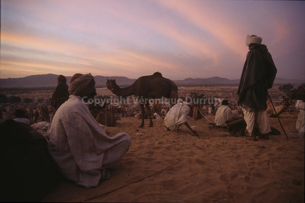 La foire aux chameaux de Pushkar est le plus grand du monde. Chaque annee, pendant les huit jours precedant la pleine lune de novembre, 10 a 20 000 chameaux sont vendus ou echanges lors de la gigantesque mela (rassemblement) qui a lieu dans la plaine de sable situee au sud de la ville, qui se transformera pour l?occasion en un formidable campement. Les nomades du desert du Thar et les paysans venus de tout le Rajasthan y planteront leurs auvents de toile et leurs tentes de fortune.