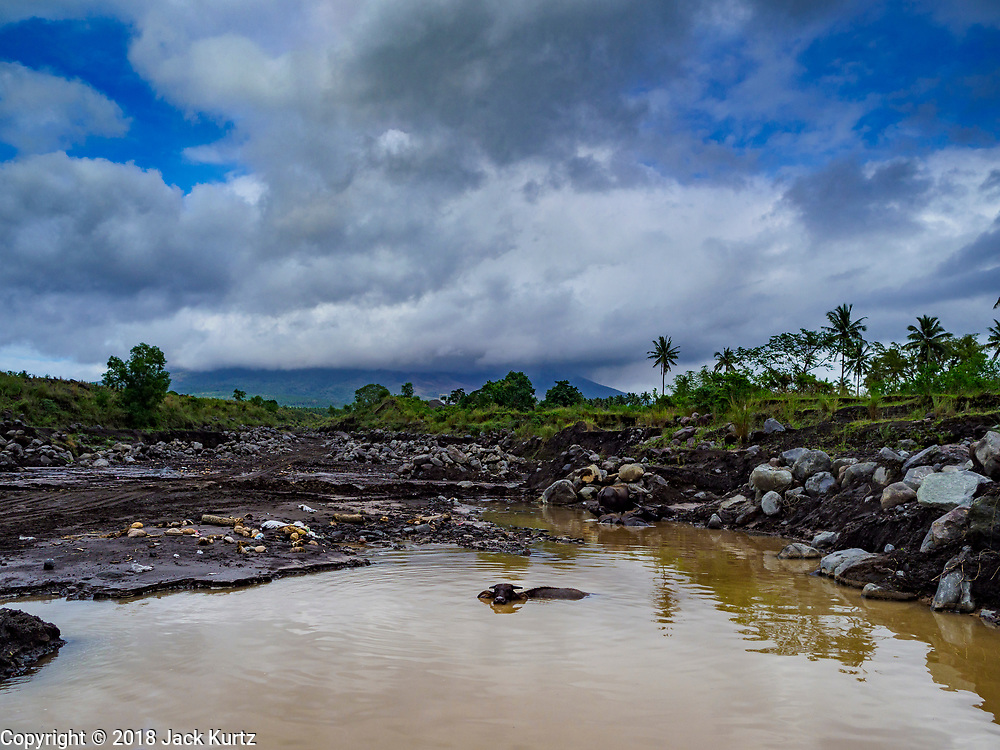 """29 JANUARY 2018 - GUINOBATAN, ALBAY, PHILIPPINES: A """"carabao"""" or water buffalo in the river in the lava bed of Mayon volcano. The volcano's eruptions have loosened rock and gravel on the mountain, increasing the chances for rockslides and floods to communities near rivers coming down the mountain. Mayon volcano's eruptions continued Monday. At last count, more 80,000 people have been evacuated from their homes of the slopes of the volcano and are crowded into shelters in communities outside of the danger zone.    PHOTO BY JACK KURTZ"""