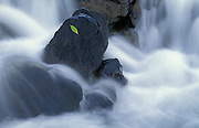 Leaf on rock and flowing waters of Dogtooth River<br /> Rushing River Provincial Park<br /> Ontario<br /> Canada