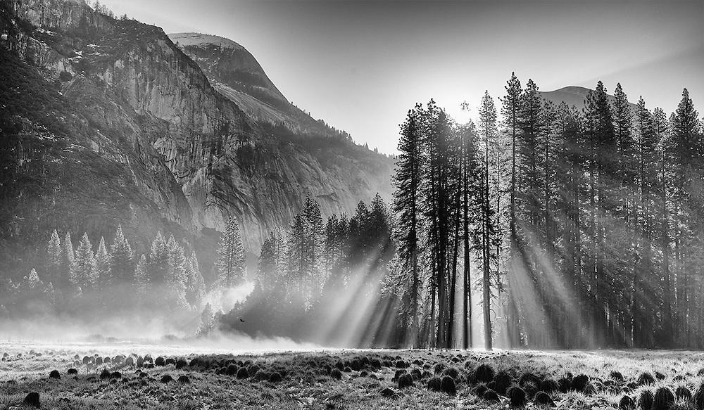 Yosemite, Ca - 2015: Yosemite Valley, 2015. Cooks Meadow.
