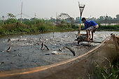 Vietnam - Fish Farming and the Decline of Mekong Fish