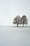 Snow Scapes