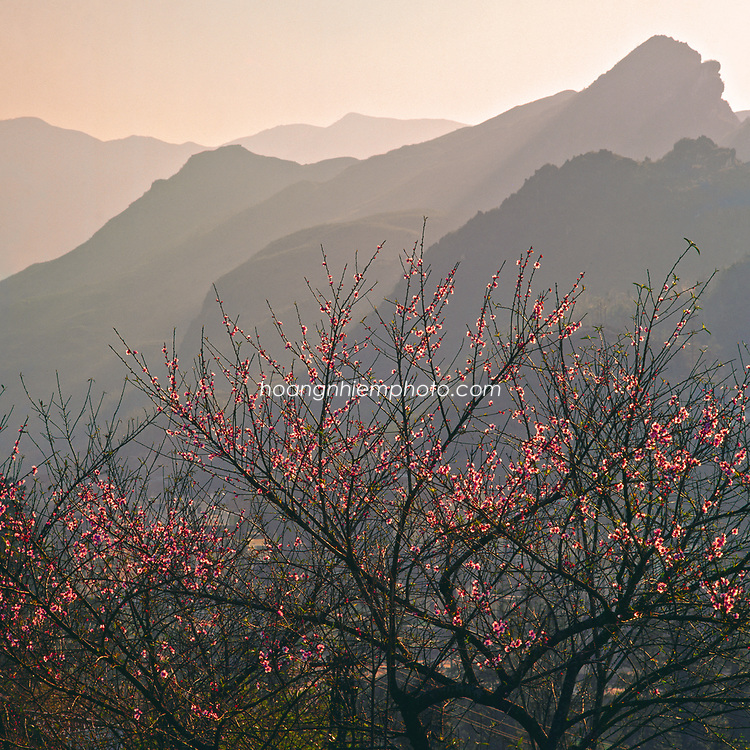 Vietnam Images-landscape-Flower-Nature-Sapa. Hoàng thế Nhiệm