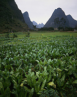 AA01202-06...CHINA - Farm fields along the Li River near Yangshuo.