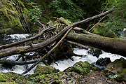 A fallen tree and snagged branches on path known as the Torrent Walk along on the (River) Afon Clwedog, on 13th September 2018, in Dolgellau, Gwynedd, Wales.