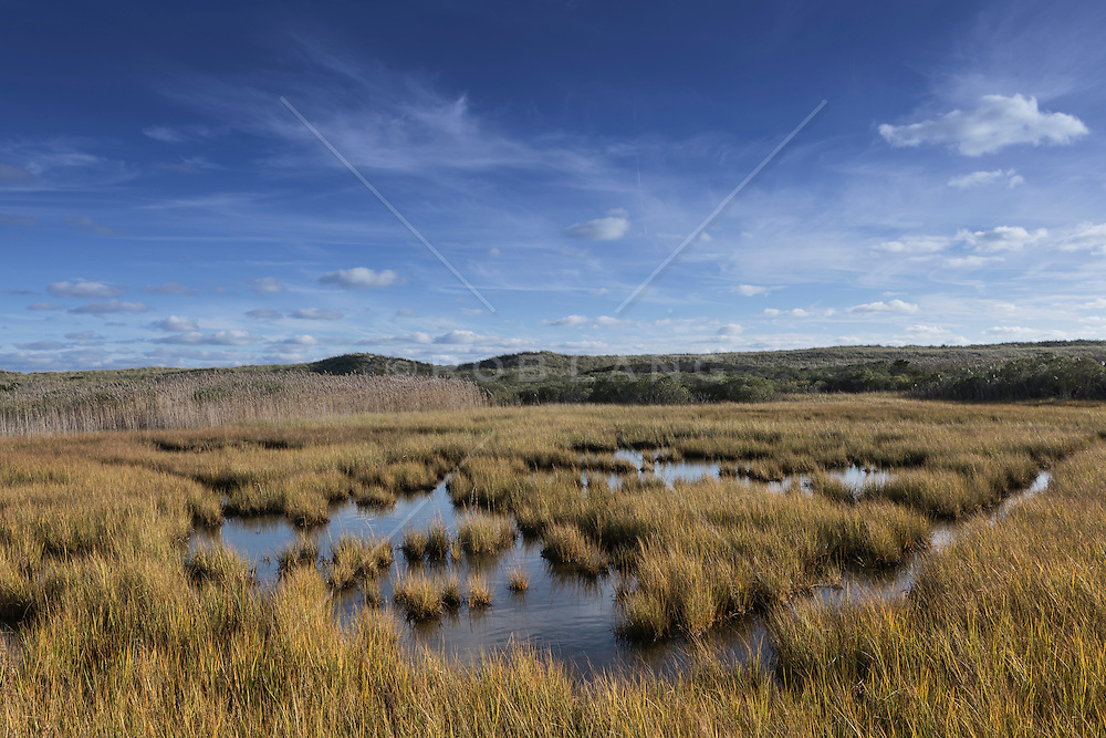 The beautiful wetlands of Hampton Bays, NY