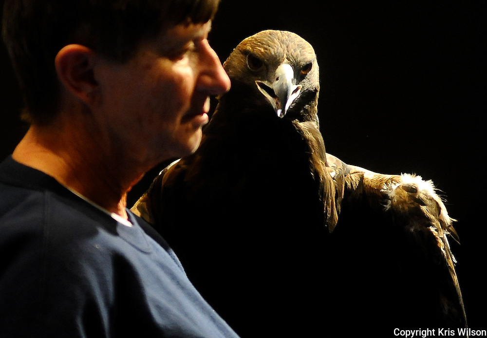 Aquila, a rehabilitated golden eagle keeps an eye on his handler, Dickerson Park Zoo docent Sue Schuble during the Eagle Adventure presentation at Runge Nature Center in Jefferson City.