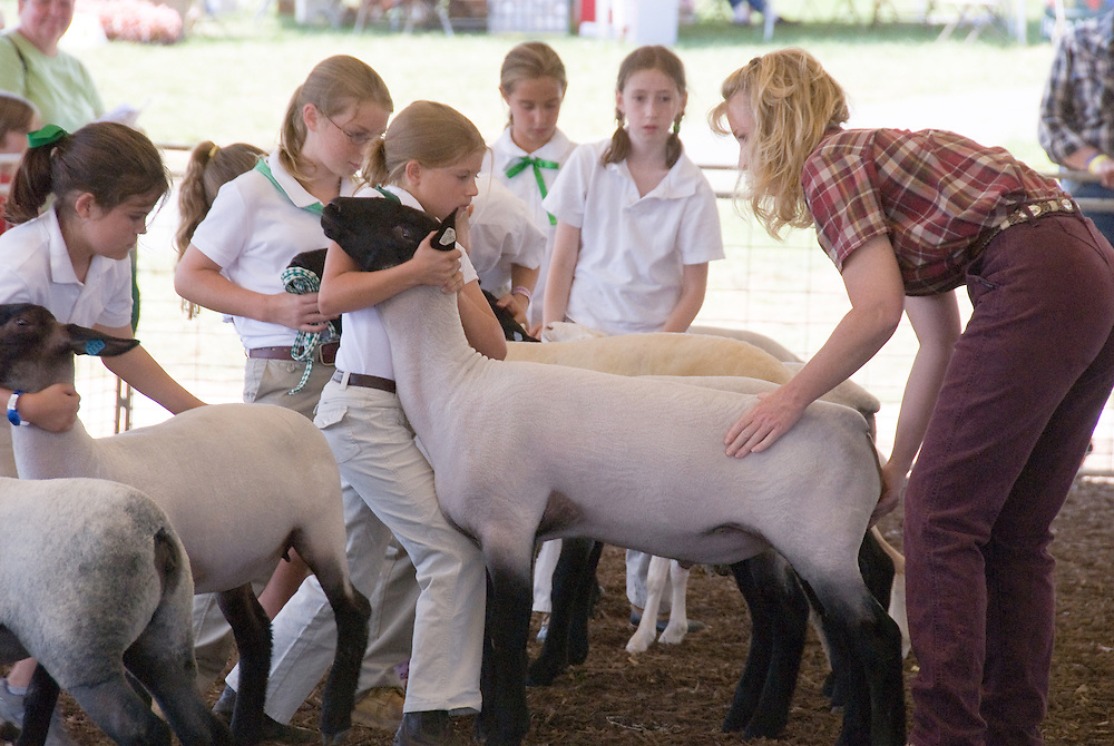 Girls with sheep at the Harford County, Md 4-H Fair