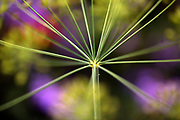 Unique Macro Flower and Plant Photography