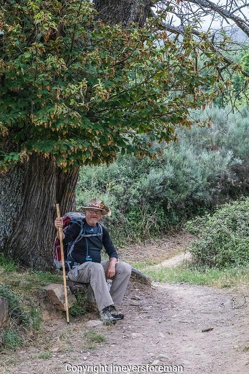 pilgrim resting under the chestnut tree.