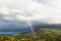 A rainbow and rainclouds over the Zululand bushveld, Thanda Private Game Reserve, KwaZulu Natal, South Africa