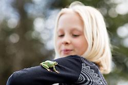 Zelena rega ali bozja zabica (Hyla arborea) / The Little Green Frog on kid's arm, on March 14, 2018 in Ljubljana, Slovenia. Photo by Vid Ponikvar / Sportida