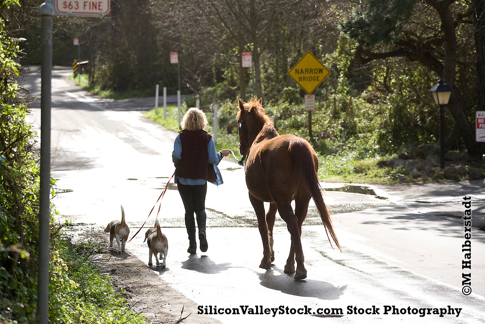 Walking the horse and the dogs, Mill Valley, CA
