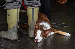 Pictured: Bill the dog was fully behind the protest<br />