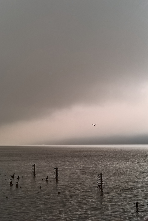 Fog and seagull on Hudson River, Yonkers, New York, US