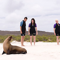Lindblad Expedition guests watch a Galapagos sea lion at Gardner Bay, one of the most beautiful beaches in the world, on Espanola Island in the Galapagos Islands of Ecuador.