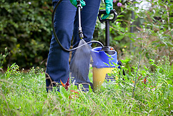 Spraying a large patch of weeds with weed killer