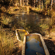Forest Cabin and surrounds, Snug, Tasmania