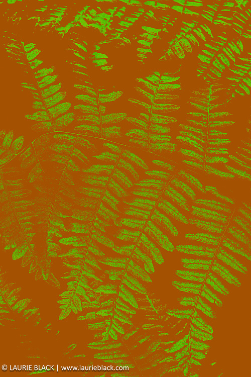 Abstract fern fine art photo