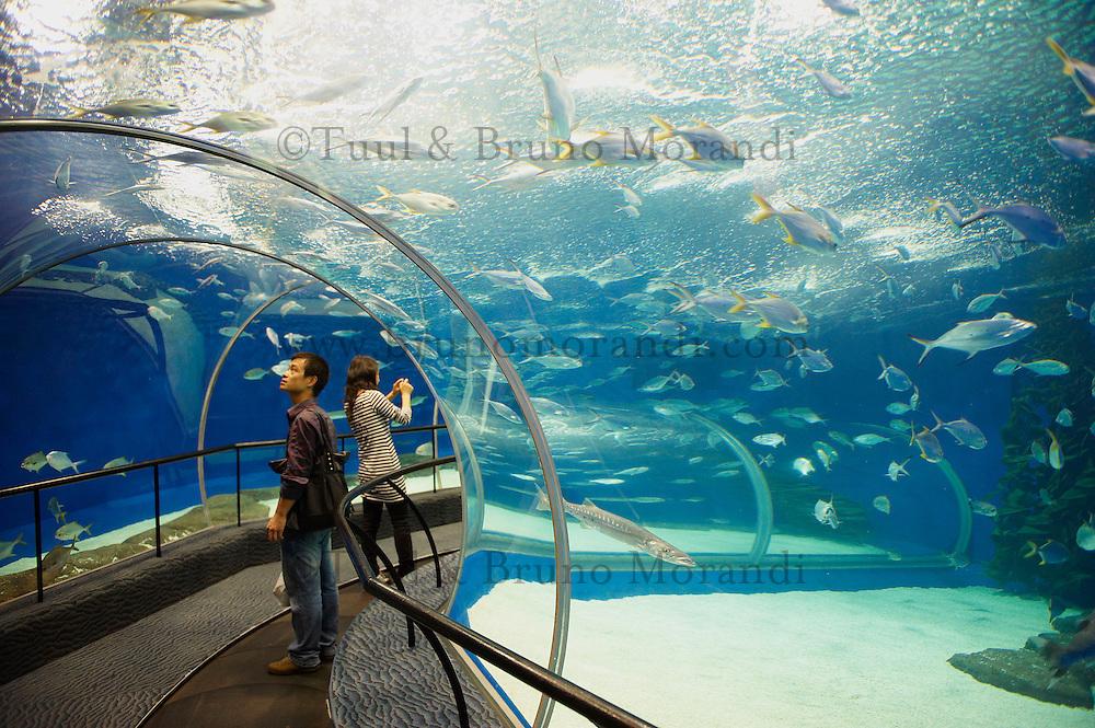 Chine, Shanghai, Aquarium de Shanghai a Pudong //  China, Shanghai, Shanghai Aquarium at Pudong