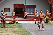 Maori people performing chief's welcoming ceremony outside, tongue out, Te Puia Maori cultural center, Rotorua,  New Zealand