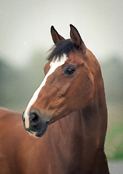 Jewel's Classic Touch<br /> Jewel Court Stud - Wuustwezel 1998<br /> © Dirk Caremans