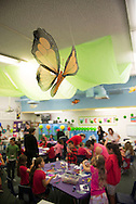 "Mrs. Hoffmann's End of Year ""Bugslife"" Party at McPherson Elementary School!"