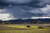 Winter Rain Storm Over Vineyards, Napa Valley, California