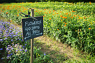 Sign at flower farm