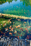 Submerged log and autumn leaves. Plitvice National Park, Croatia