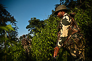 Members of India's Central Reserve Police (CRP) perform a security sweep of the forest surrounding their base in the town of Basur in the state of Chhattisgarth, October 15, 2009. The Indian goverment is making a push to contain a increasingly violent Maoist movement that in recent months is responsible for the murder of 17 police officers and disruption for public works projects and local elections.