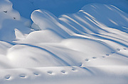 Animal tracks in the snow, Kootenay National Park, British Columbia, Canada