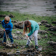 Children look for crabs under rocks along the coast of Washington during low tide.