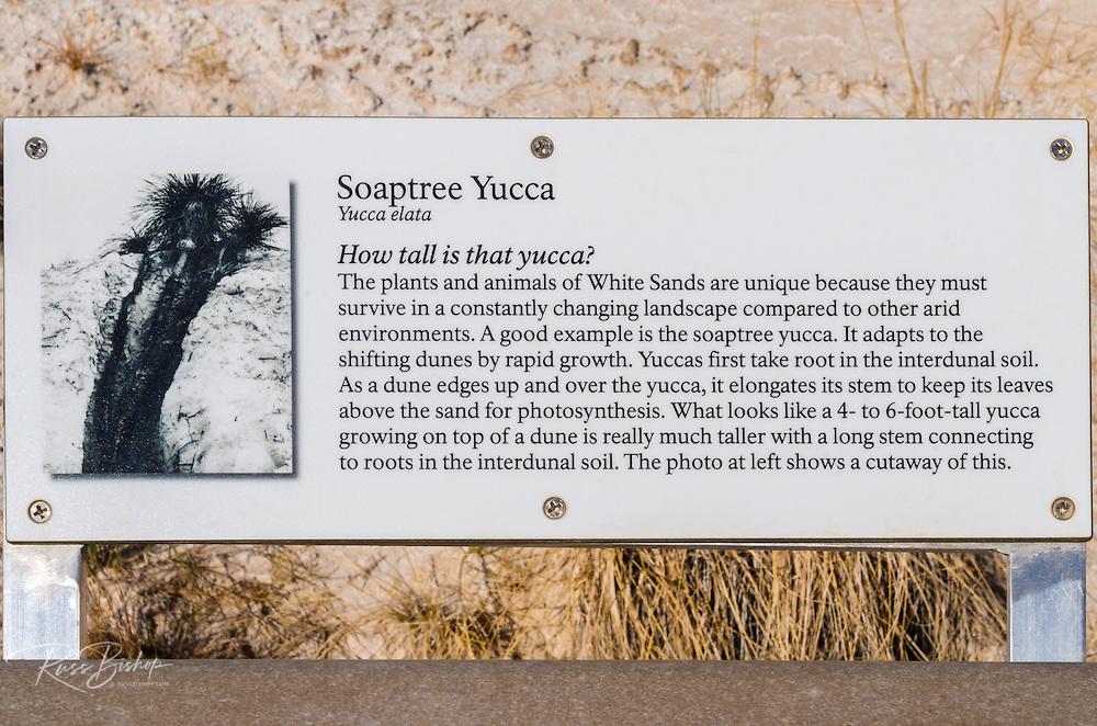 Interpretive boardwalk, White Sands National Monument, New Mexico USA