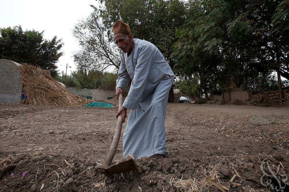 Egyptian farmer Farouk Hassan Beyoumi, age 79 works his farmland October 27, 2011 in the village of Warwara, Egypt, about 50 kilometers north of the capital, Cairo. Beyoumi and other farmers from the village claim they have yet to be properly compensated for their land that was taken to build a new road through the area. (Photo by Scott Nelson)
