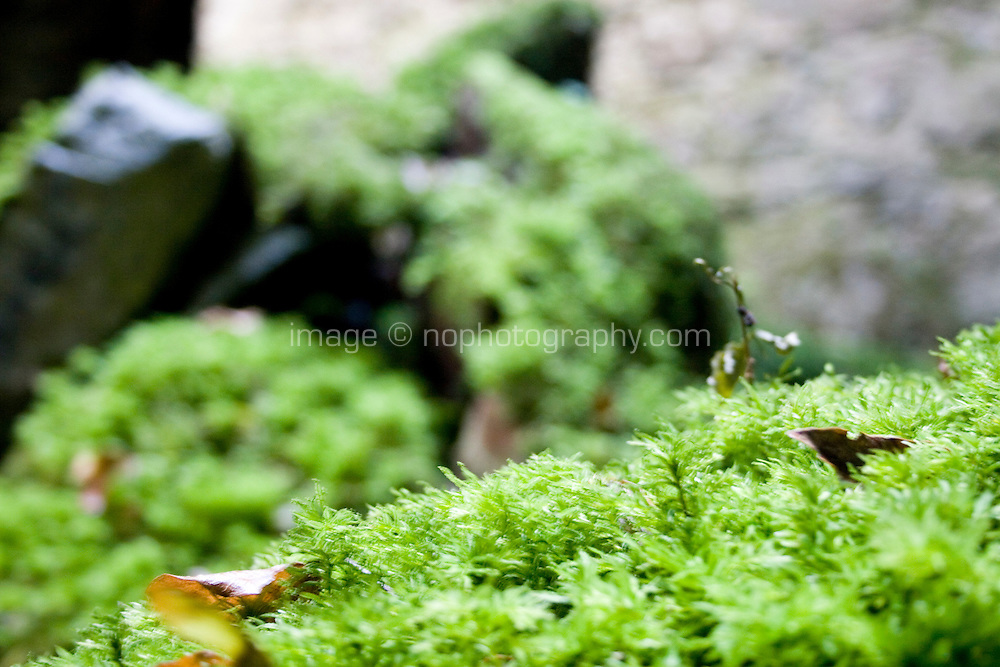Moss covering stone on castle in Westmeath Ireland