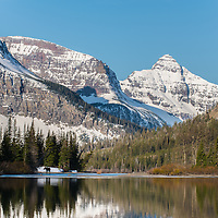 moose cow and calf two medicine lake, glacier national park, montana