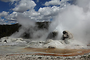 Grotto Geyser erupting, found in the Upper Geyser Basin of Yellowstone National Park, Wyoming, USA