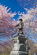 The Pilgrim Statue on Pilgrim Hill with Yoshino Cherry Trees in spring in Central Park, New York City.