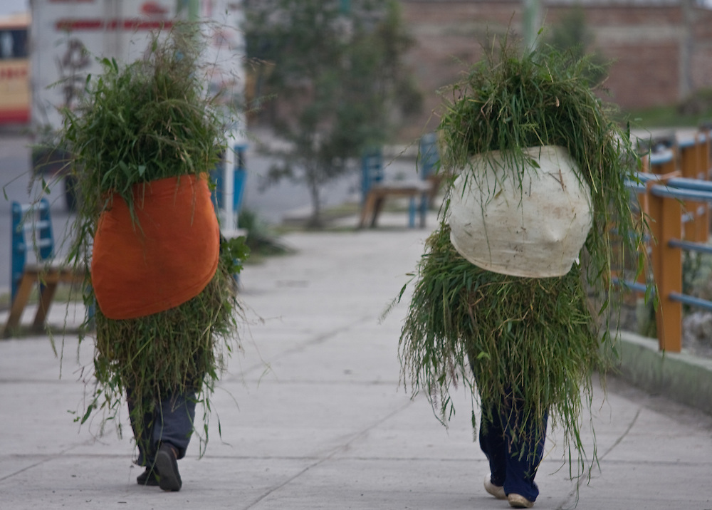 two women carry grass in southern Ecuador