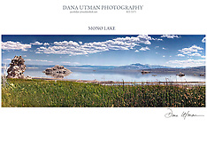 Dana Utman Photography
